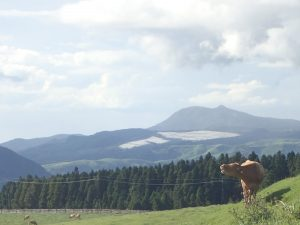 熊本県、大字中松、111号線、牛の放牧観光