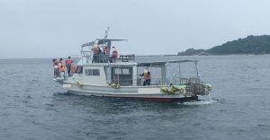 シークルーズ:イルカウォッチング、例