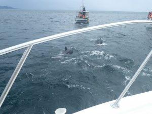 シークルーズ:イルカ生息地