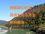 相模湖の紅葉:見頃を知る方法や無料観光と知っておきたい情報
