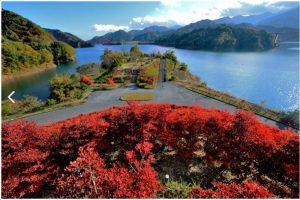 宮ヶ瀬ダム:鳥居原湖庭園から花時計や岬展望台