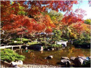 大磯城山公園:紅葉
