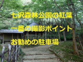 県立七沢森林公園の紅葉:一番の撮影ポイントとオススメの駐車場