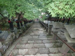 大山寺の新緑モミジ