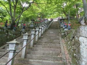 大山寺:新緑のモミジ