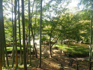 県立大磯城山公園:紅葉と竹 ライトアップ