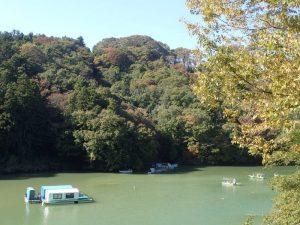 相模湖:緑色