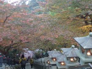 大山寺:紅葉 日没前