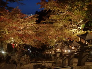 大山寺:モミジライトアップ 紅葉
