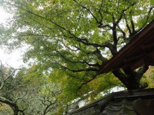 東慶寺の紅葉シーズン撮影ポイント