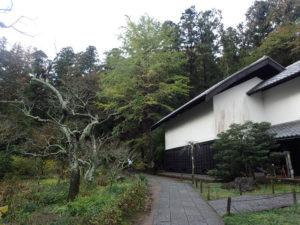 東慶寺の大イチョウ:黄葉