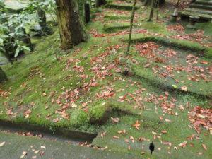 東慶寺:紅葉時期の苔と落ち葉