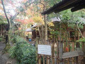 明月院:月笑軒周囲の紅葉