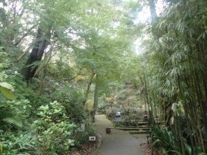 浄智寺:モミジと竹林