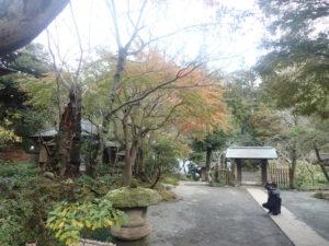 浄智寺:棟門とモミジ