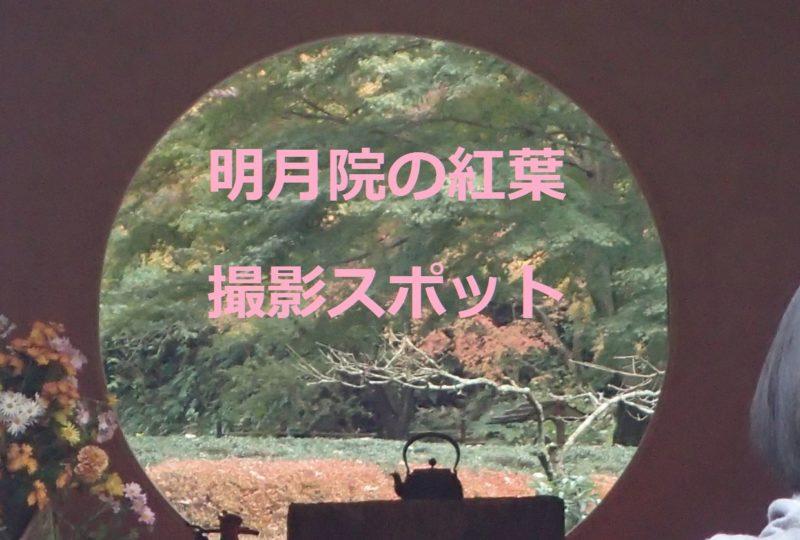明月院の紅葉!撮影スポット