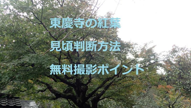 東慶寺の紅葉!見頃判断方法と無料撮影ポイント