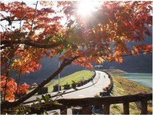 丹沢湖:遊歩道