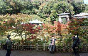 円覚寺:妙香池とモミジと撮影スポット