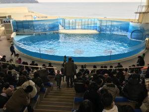 新江ノ島水族館:イルカショースタジアム上段からの眺め