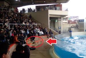 新江ノ島水族館:イルカショースタジアムで濡れやすい極め場所