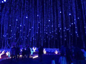 さがみ湖イミリオン:光のアクアリウム