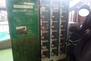 新江ノ島水族館:カピバラのごはんやり、エサ購入BOX