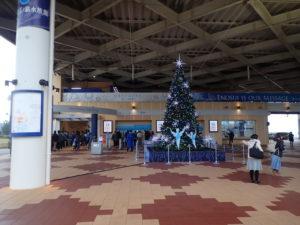 新江ノ島水族館クリスマスツリーとクリネオ