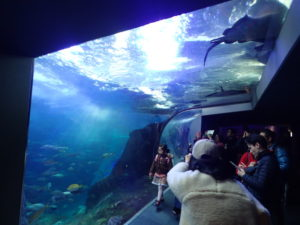 新江ノ島水族館:天井部がガラス張りの水槽