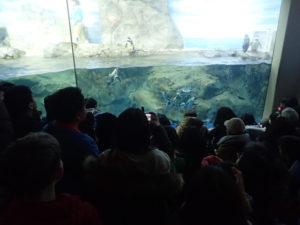 新江ノ島水族館:ペンギンショー見えづらい場所