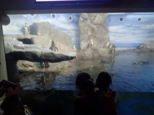 新江ノ島水族館:ペンギンショーの見やすい場所 オススメ場所