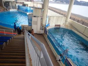 新江ノ島水族館:イルカショースタジアムの穴場