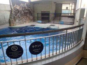 新江ノ島水族館:イルカショースタジアムタッチプール