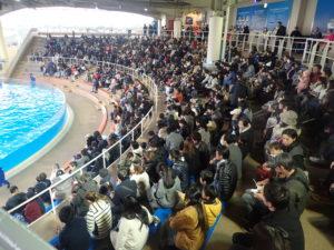 新江ノ島水族館:イルカショースタジアム客席