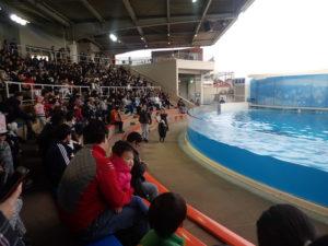 新江ノ島水族館:イルカショースタジアム3段目からの眺め