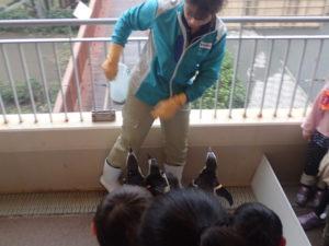 新江ノ島水族館:ペンギンのおさんぽ