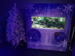 新江ノ島水族館:デンキウナギとクリスマスツリー