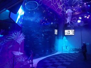 新江ノ島水族館:相模湾大水槽1Fからの眺め