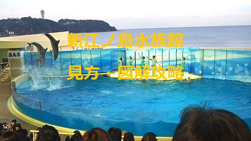 新江ノ島水族館・見方や図解攻略・タイムスケジュール攻略